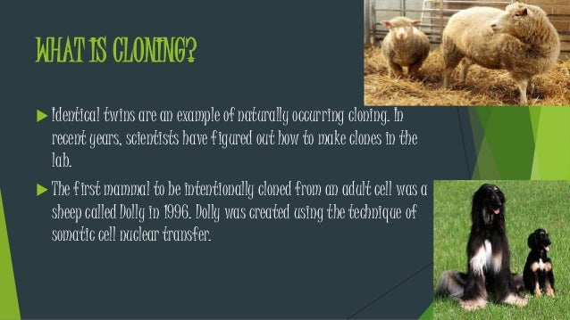 Examples of selective breeding?