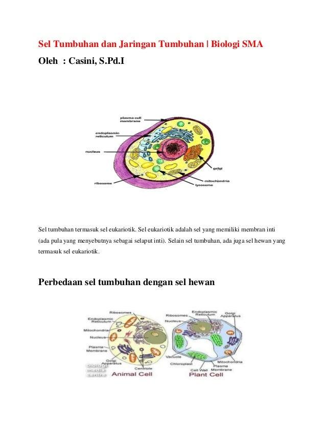 Sel Tumbuhan dan Jaringan Tumbuhan | Biologi SMA Oleh : Casini, S.Pd.I  Sel tumbuhan termasuk sel eukariotik. Sel eukariot...