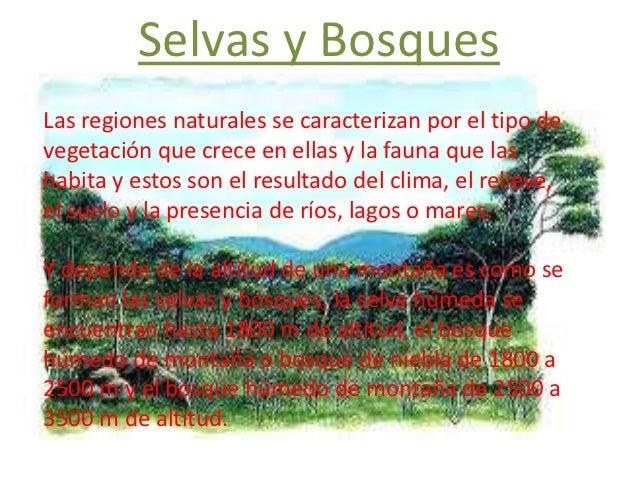 Selvas y bosques