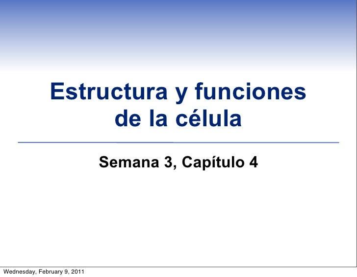 Estructura y funciones                    de la célula                              Semana 3, Capítulo 4Wednesday, Februar...