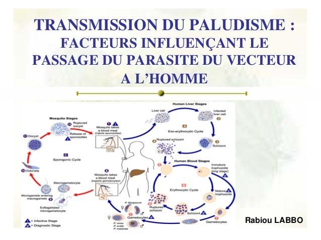 TRANSMISSION DU PALUDISME :   FACTEURS INFLUENÇANT LEPASSAGE DU PARASITE DU VECTEUR          A L'HOMME                    ...