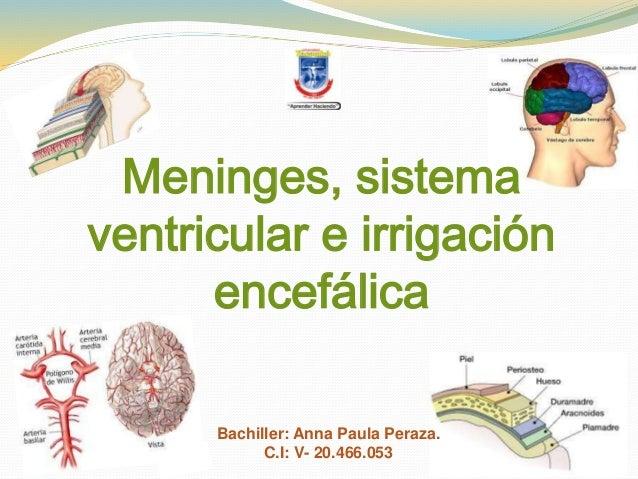 Meninges, sistema  ventricular e irrigación  encefálica  Bachiller: Anna Paula Peraza.  C.I: V- 20.466.053