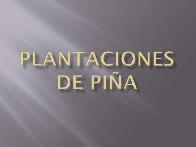 TERRENOS DE PLANTACIONES DE PIÑA