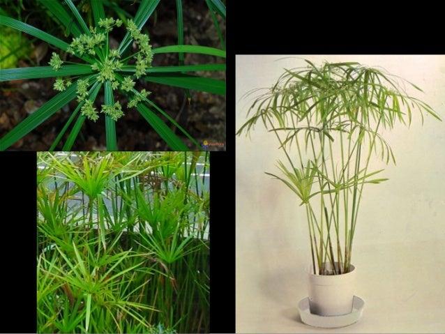 semi aquatique et plante grasse. Black Bedroom Furniture Sets. Home Design Ideas