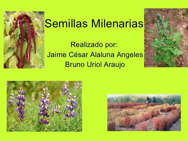 Semillas Milenarias Realizado por:  Jaime César Alaluna Angeles Bruno Uriol Araujo