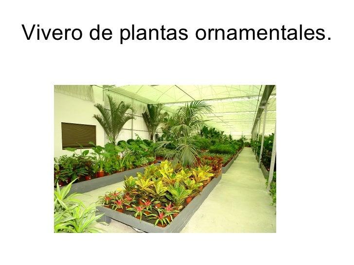 Semilleros y viveros instalaciones y materiales empleados for Plantas de vivero