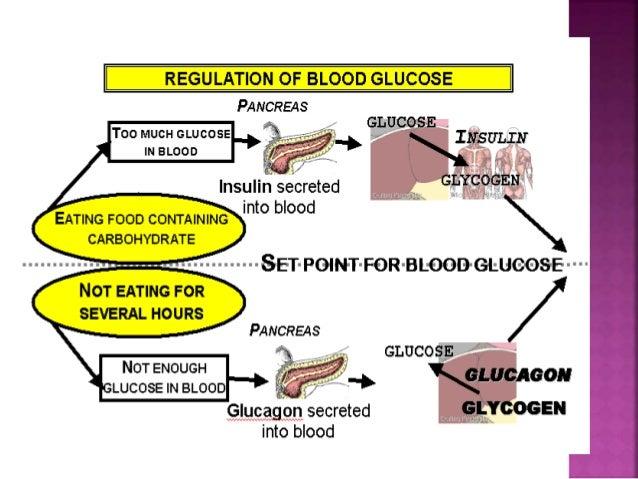 Normal Regulation of Blood Glucose