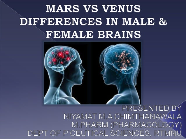 What Are The Differences Between Male And Female Brains