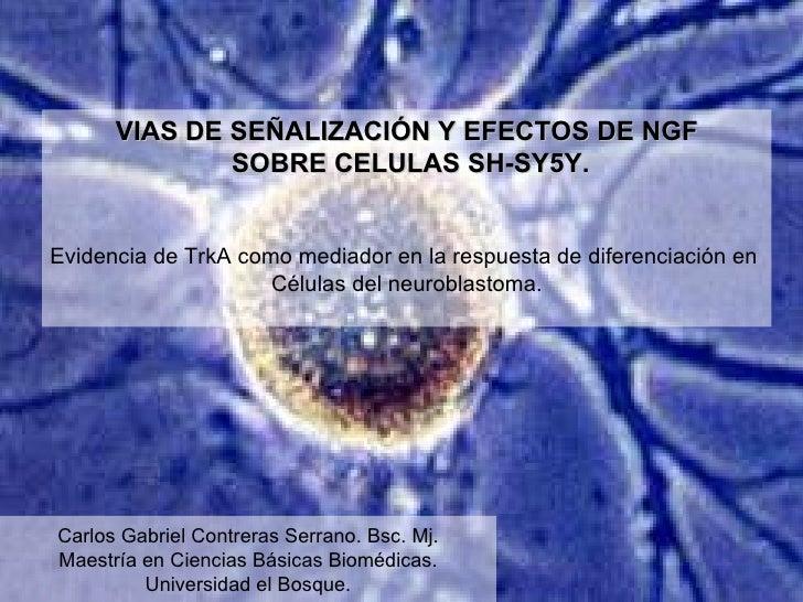 Carlos Gabriel Contreras Serrano. Bsc. Mj. Maestría en Ciencias Básicas Biomédicas. Universidad el Bosque. VIAS DE SEÑALIZ...