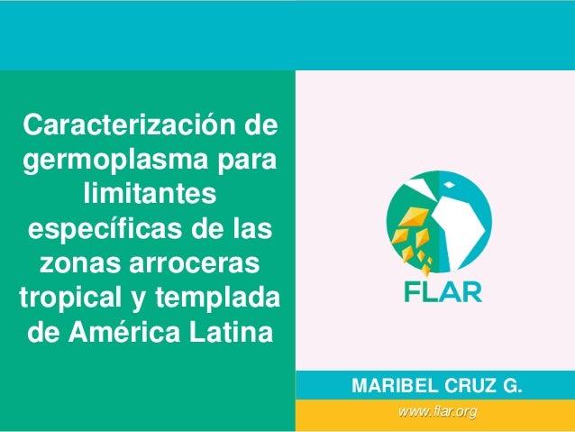 Caracterización de germoplasma para limitantes específicas de las zonas arroceras tropical y templada de América Latina MA...