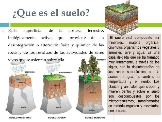 Suelos y plantas for Como se creo el suelo