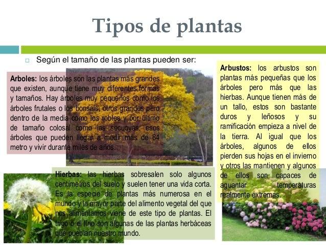 Suelos y plantas for Cuales son los tipos de plantas