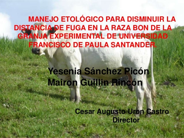 MANEJO ETOLÓGICO PARA DISMINUIR LA DISTANCIA DE FUGA EN LA RAZA BON DE LA GRANJA EXPERIMENTAL DE UNIVERSIDAD FRANCISCO DE ...