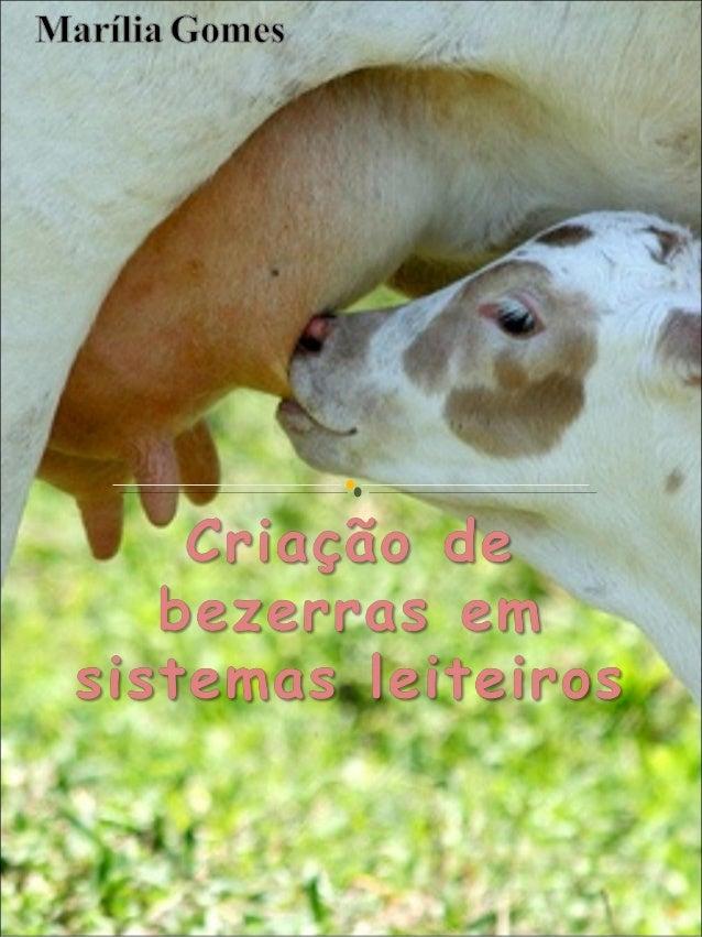 Compreender  a  importância  da  criação de bezerras em rebanhos leiteiros, com foco na nutrição   Gestação - Pré-parto ...