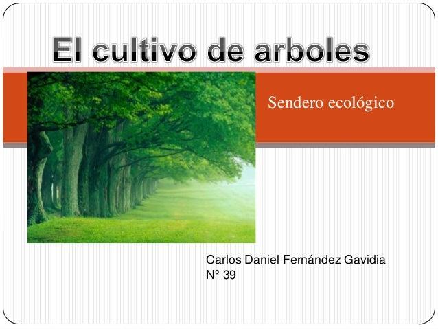 Sendero ecológicoCarlos Daniel Fernández GavidiaNº 39