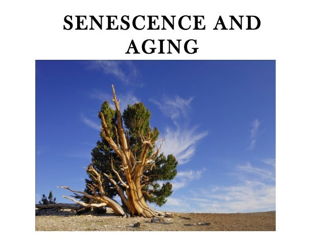 Senescence and aging   plaphlec
