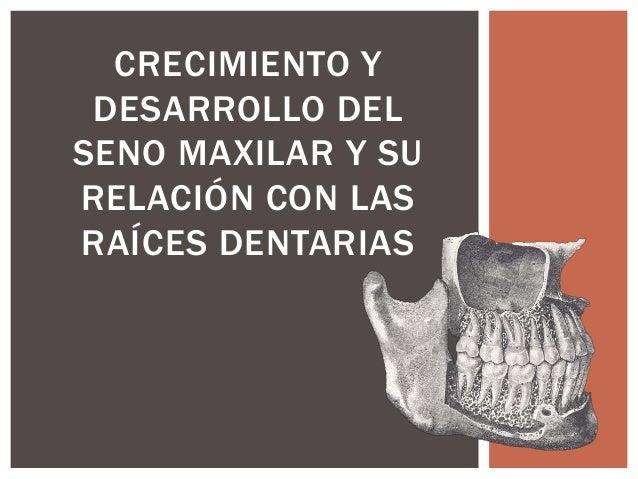 CRECIMIENTO Y DESARROLLO DEL SENO MAXILAR Y SU RELACIÓN CON LAS RAÍCES DENTARIAS