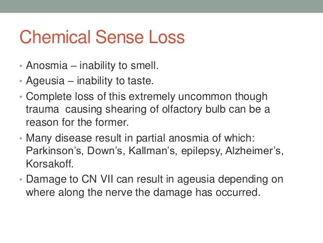 sensory perceptions 2 essay