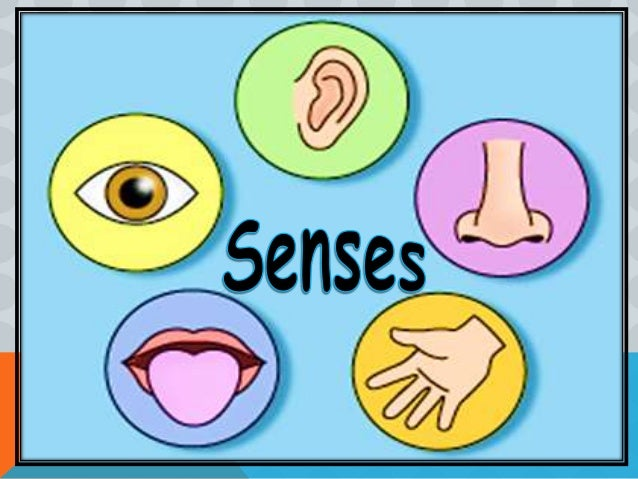 psychology sensory system and color perception The visual system color vision gestalt psychology depth senses and perception information from the environment is analyzed by sensory systems operating in.