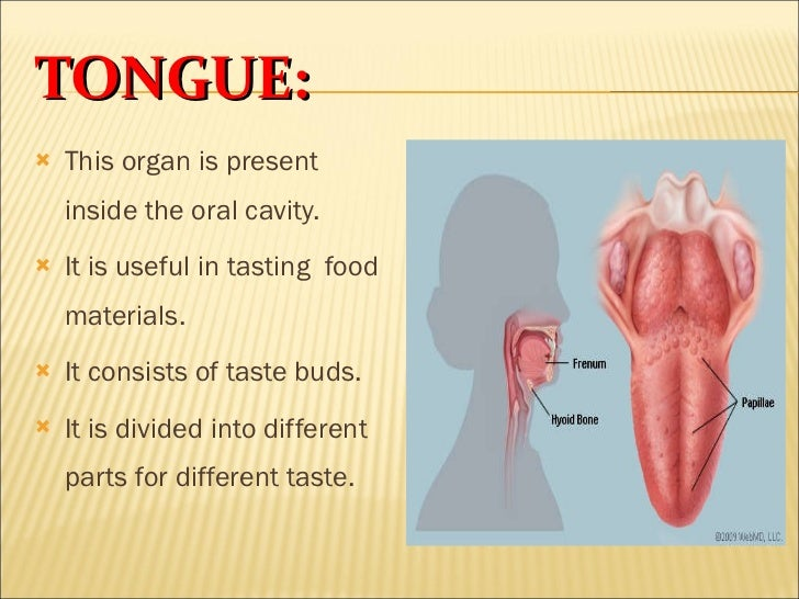 a look at the nature and functioning of the ear organ in the body Science & nature homepage your liver is your largest internal organ remove ammonia from your body and produce blood proteins.