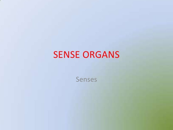 Sense Organs 12875004 further Sense Organs 12875004 also Sense Organs 12875004 further  on sense organs 12875004