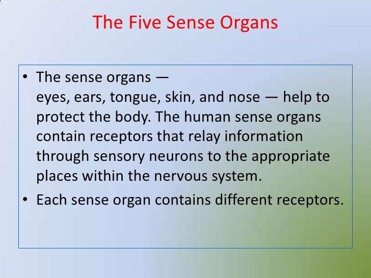 Sense Organs 12875004 further Sense Organs 12875004 furthermore Sense Organs 12875004 in addition Sense Organs 12875004 moreover Sense Organs 12875004. on sense organs 12875004