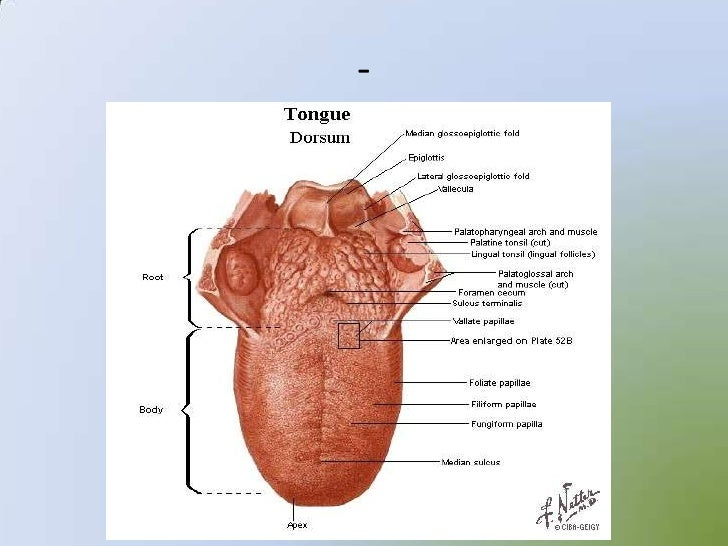 Sense Organs 12875004 further Sense Organs 12875004 moreover Sense Organs 12875004 additionally Sense Organs 12875004 moreover Sense Organs 12875004. on sense organs 12875004