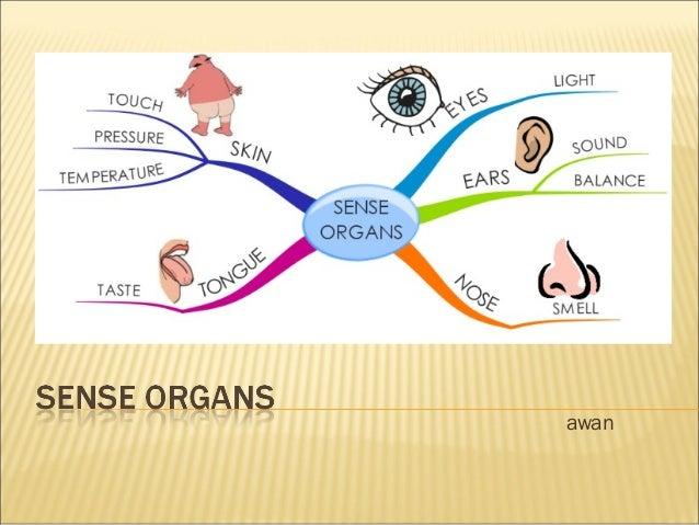 Grade 9 - Sense Organs