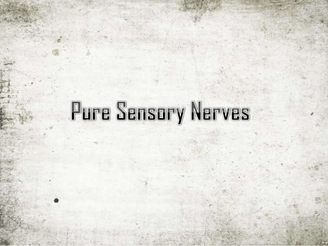 the first cranial nerve, or simply CNI, carries the sensory information for the sense of smell. Derived from the embryonic...
