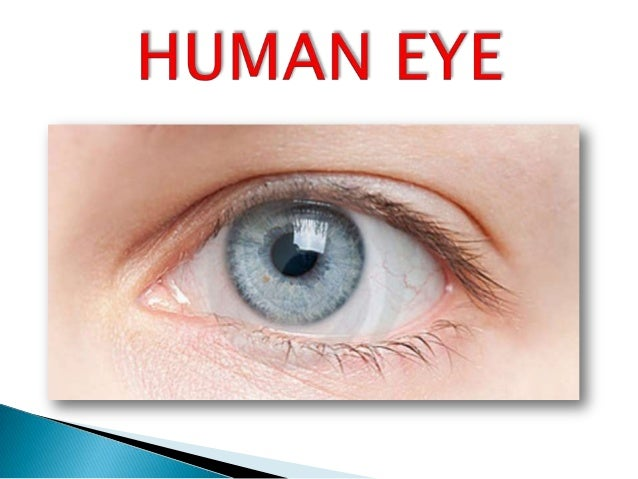 Anatomy of human eyes