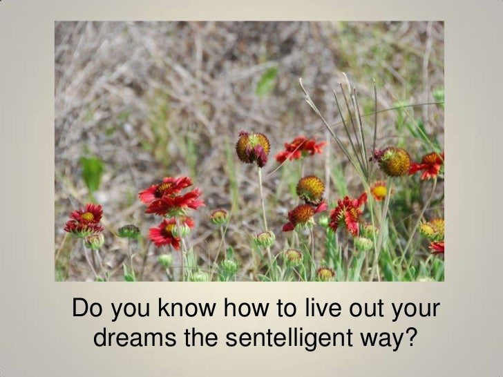 Do you know how to live out your dreams the sentelligent way?<br />