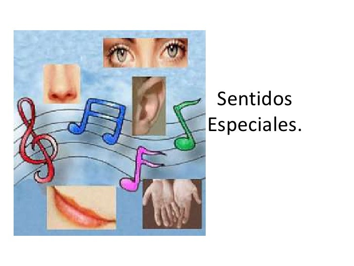 Corpúsculos de los Sentidos especiales histología