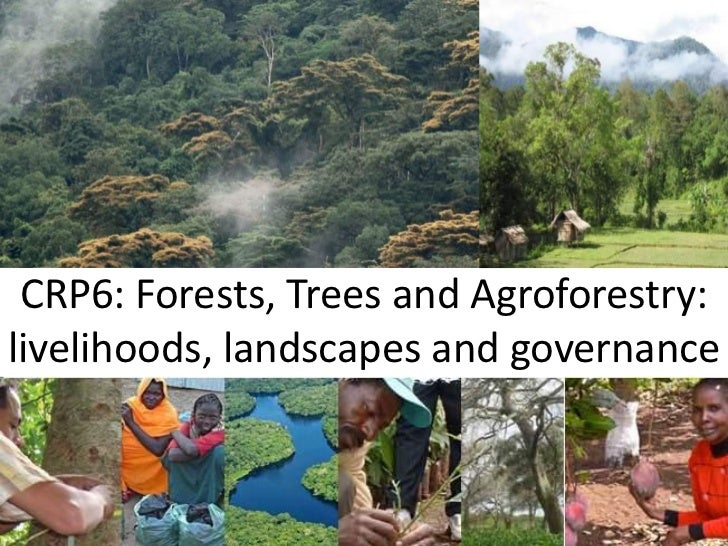 CRP6: Forests, Trees and Agroforestry:livelihoods, landscapes and governance