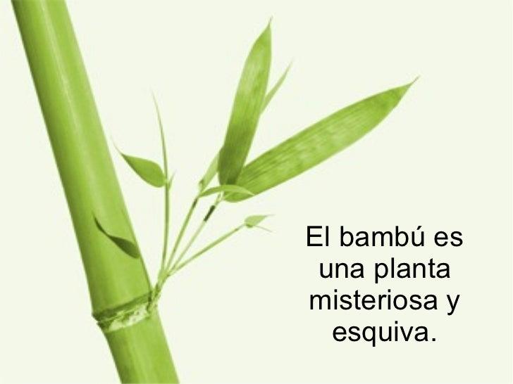 El bambú es una planta misteriosa y esquiva.