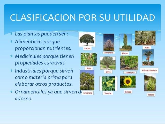 Seres imprescindibles para la vida for Clases de plantas ornamentales