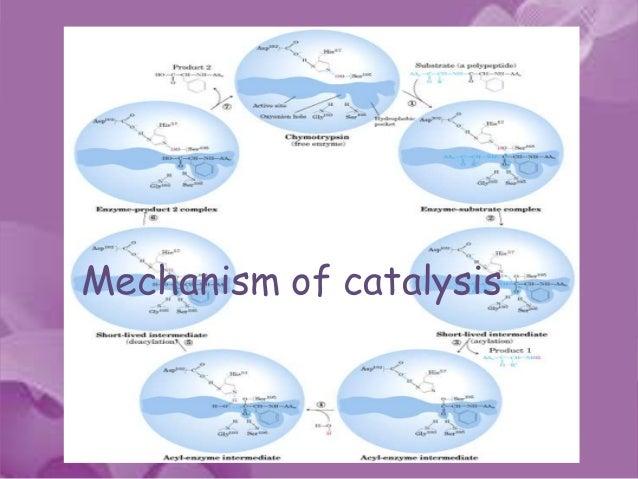 download free software fundamentals of biochemistry voet