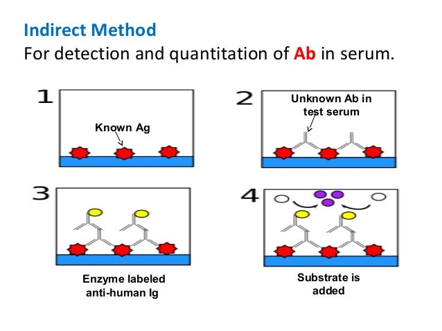 particle agglutination test Sud serodia-tp,pa passive particle agglutination test for detection of antibodies to t pallidum at the various stages of syphilis anti-tp antibody.