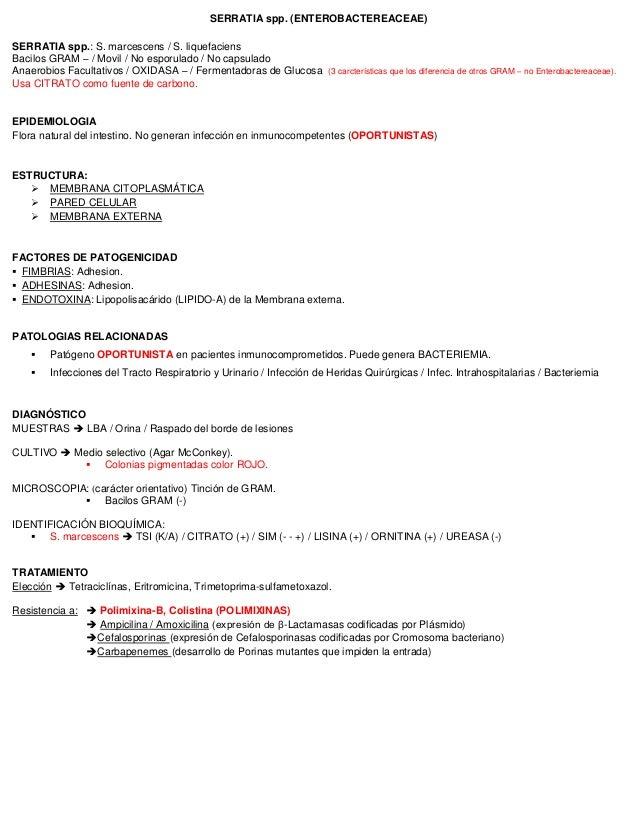 SERRATIA spp. (ENTEROBACTEREACEAE) SERRATIA spp.: S. marcescens / S. liquefaciens Bacilos GRAM – / Movil / No esporulado /...
