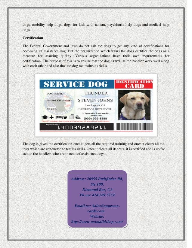 How To Train And Certify A Service Dog