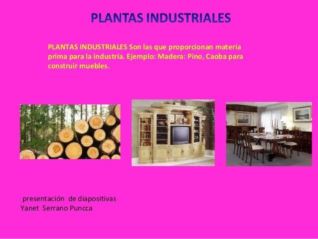 Sesion 2 clasificacion de planta for 5 plantas ornamentales con sus nombres