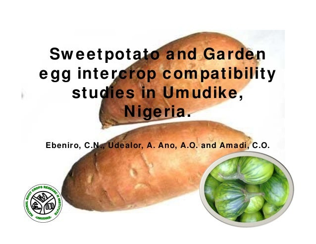 Sweetpotato and Garden egg intercrop compatibility studies in Umudike, Nigeria. Ebeniro, C.N., Udealor, A. Ano, A.O. and A...