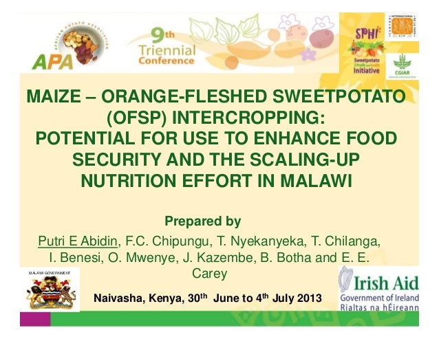 MAIZE – ORANGE-FLESHED SWEETPOTATO (OFSP) INTERCROPPING: POTENTIAL FOR USE TO ENHANCE FOOD SECURITY AND THE SCALING-UP NUT...