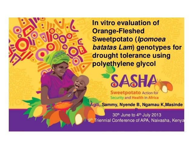 In vitro evaluation of Orange-Fleshed Sweetpotato (Ipomoea batatas Lam) genotypes for drought tolerance using polyethylene...