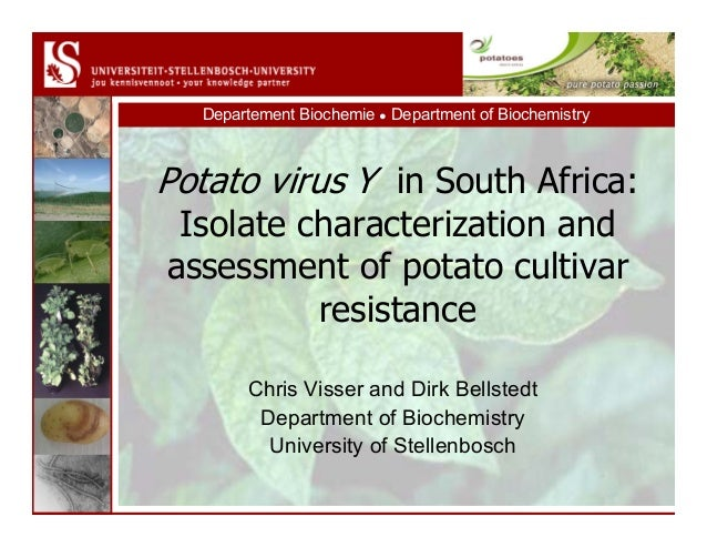 Departement Biochemie ● Department of Biochemistry Potato virus Y in South Africa: Isolate characterization and assessment...