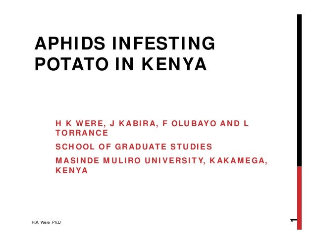 APHIDS INFESTING POTATO IN KENYA H K WERE, J KABIRA, F OLUBAYO AND L TORRANCE SCHOOL OF GRADUATE STUDIES MASINDE MULIRO UN...