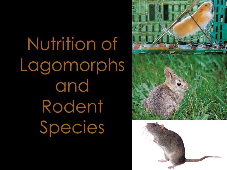 Session 10   Lagomorphs And Rodents