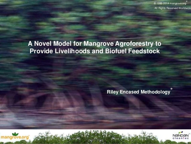 mangrove.org ® A Novel Model for Mangrove Agroforestry to Provide Livelihoods and Biofuel Feedstock © 1996-2014 mangrove.o...