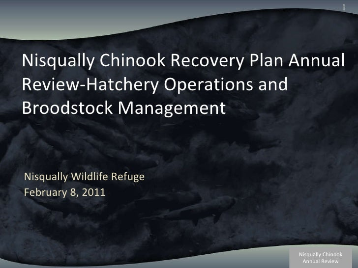 Nisqually Chinook Recovery Plan Annual Review-Hatchery Operations and Broodstock Management Nisqually Wildlife Refuge Febr...