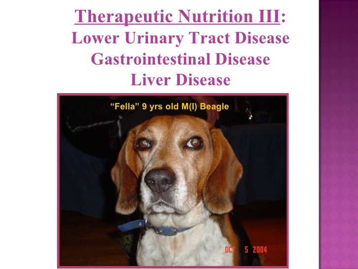 "Therapeutic Nutrition III : Lower Urinary Tract Disease Gastrointestinal Disease Liver Disease "" Fella"" 9 yrs old M(I) Bea..."