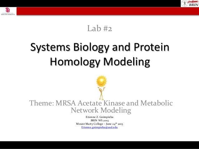 Systems Biology and ProteinHomology ModelingTheme: MRSA Acetate Kinase and MetabolicNetwork ModelingLab #2Etienne Z. Gnimp...